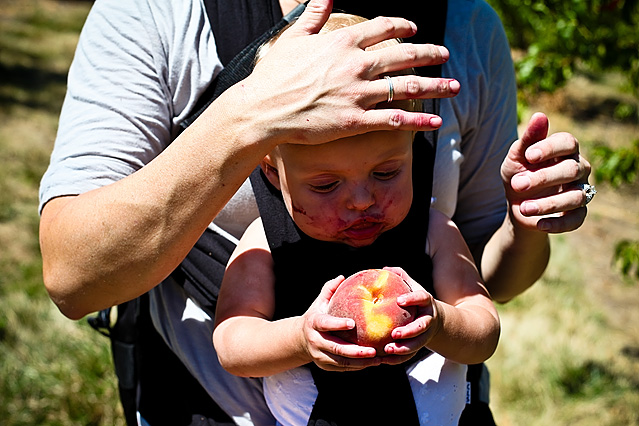 Peach Picking